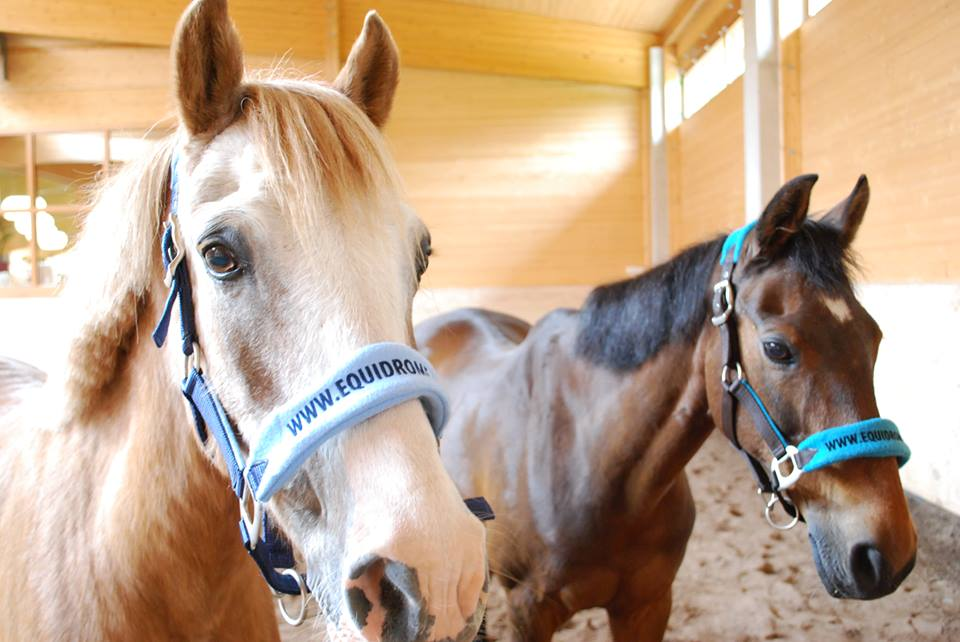 Paarden cadeau