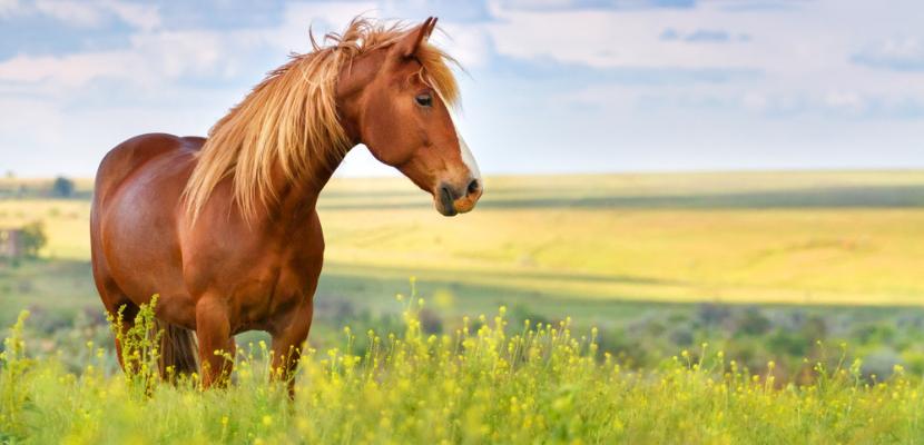 Paard_Equidrome
